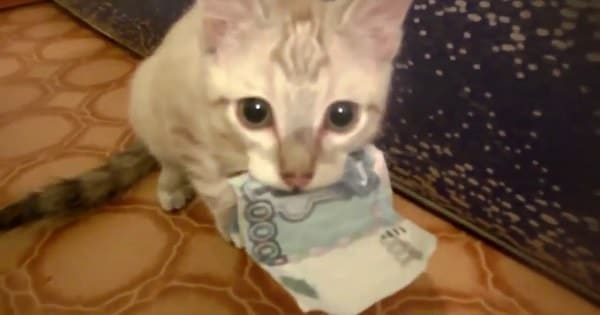 """""""This Is My Money, Human""""!"""
