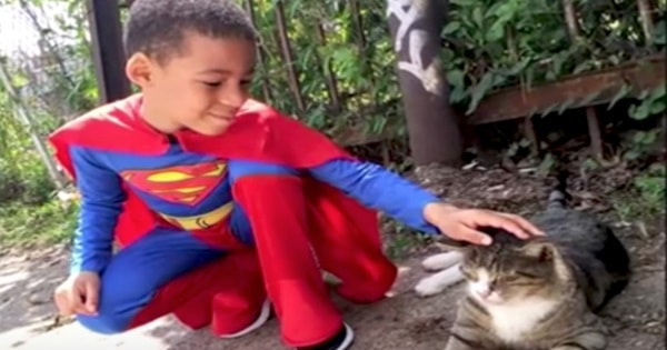 Presenting The 5-Year-Old 'Catman,' a Caped Crusader Who is Helping Philadelphia's Strays!