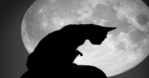 List Of Cat Superstitions From All Over The World!
