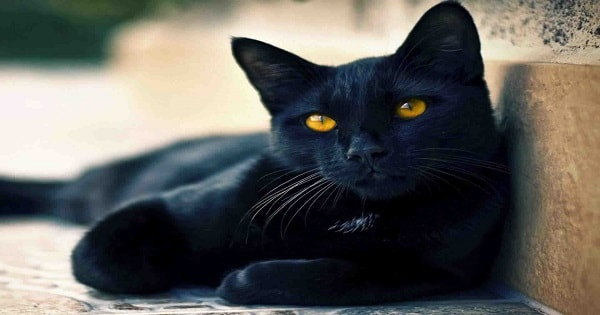 13 Instagram-Famous Black Cats Proving That All Kitties Are Beautiful