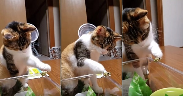 Cat Gently Pets A Frog Is All The Cute You Need To See Today
