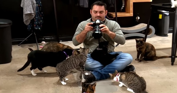 """This """"My Cat From Hell"""" Cameraman Simply Couldn't Leave Without Adopting A Kitty Of His Own"""