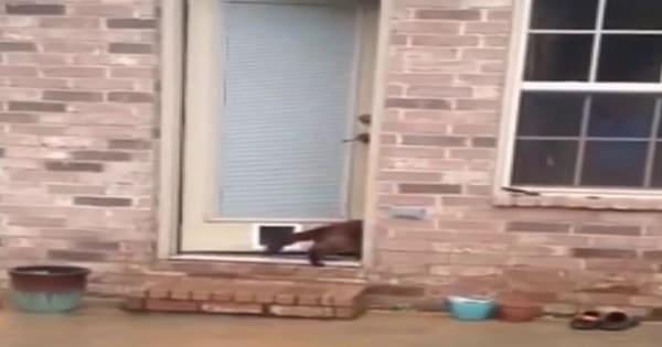 "Epic ""Cat Door"" Fail: Part One!"