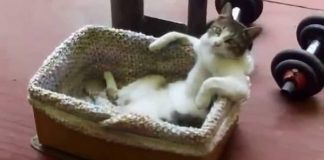 Cat Relaxing - Truly, A Must-see