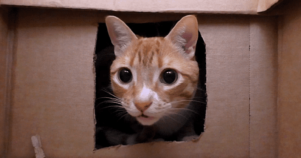 America's Favorite Cat Guy, Chris Poole, Builds The Best Maze For His Feline Friends And Goes Viral