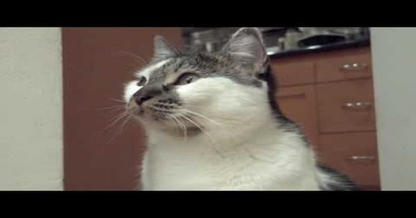 """My Talking Cat Says: """"I Don't Know""""!"""