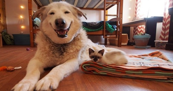 Dog Lost Her Best Feline Friend, But Then - Kittens Come To Her Rescue