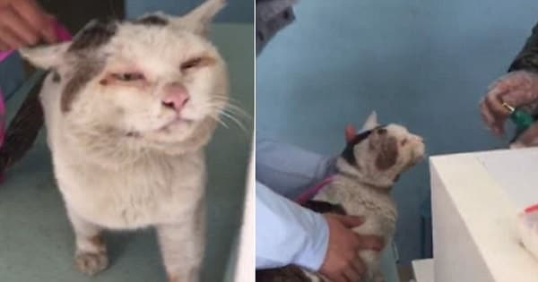 This Homeless Cat 'Without Eyelids' Received Surgery From A Kind Vet And Now ...