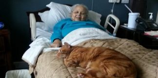 Cat Desperately Wanted To See Grandma Who Checked into Rehab Center. So They Decided To Sneak ...