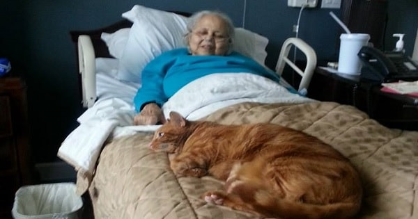 Cat Desperately Wanted To See Grandma Who Checked into Rehab Center