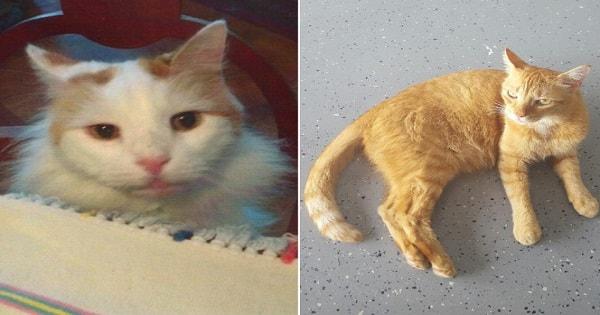Widow In New York Dies And Leaves Something Very Substantial For Her Kitties …