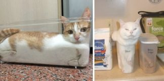 "20+ Times Cats Declared: ""If It Fits, I Sits"" And Proved Themselves Right"