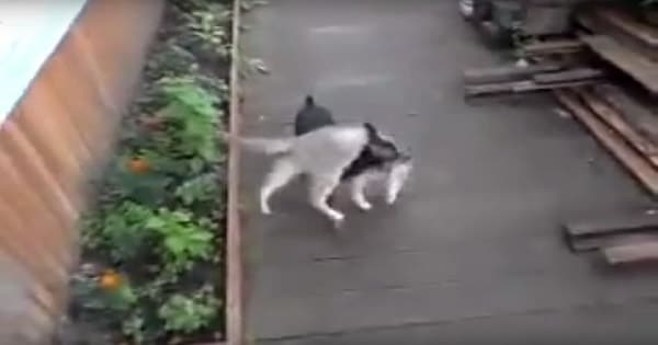 This Kitty Refused To Come Inside, But Luckily, The Family Dog Stepped In and …