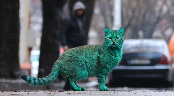 There Seems To Be A Green Cat Running Around Bulgaria – And NO, It's NOT Photoshop!