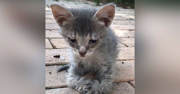 Kitty with eye infection and deformed feet was alone, trying to survive. Finally he found someone to care for him