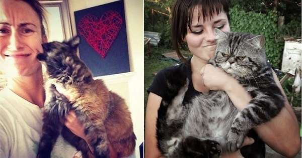 10+ Times Cats Simply Did Not Want To Be In Your Stupid Selfies And The Result Was Hilarious