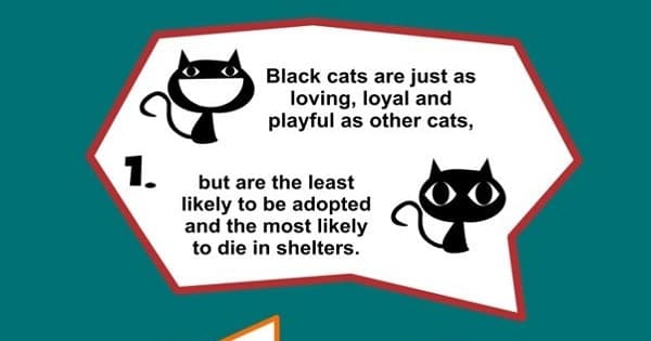 The 14 Reasons Why Everyone Would Be Lucky To Love A Black Cat