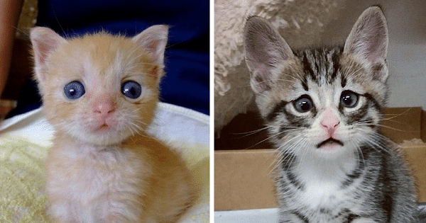 10+ Adorable Cats Who Have Googly Eyes, But Are Gorgeous Nonetheless!