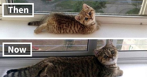 10+ Before-And-After Photos Of Adorable Kitties Growing Up!