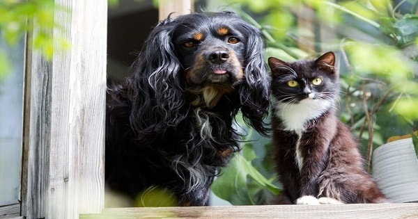 8 Common Household Items That Are Toxic To Pets
