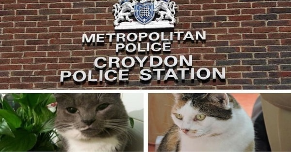 Physical Description Finally Issued Of Croydon Cat Killer – And He Sounds Like A Real Creep!