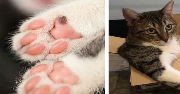 The 18 Things All Real Cat Lovers Know To Be True