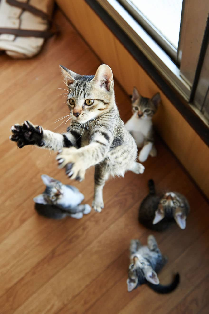 Check These 10 Adorable Ninja Cats Pink Paws Ninjas In