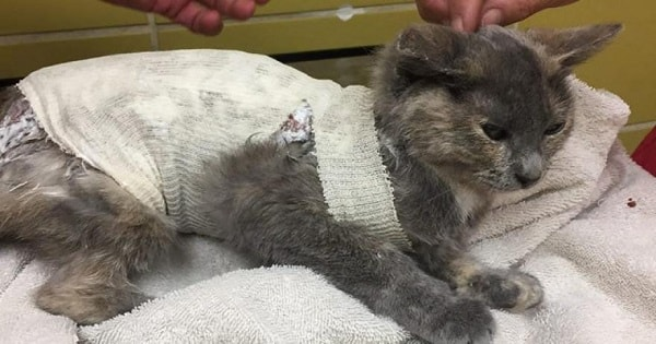 This Poor Cat Was Burned With Chemicals, Abandoned And Put On The 'To Destroy List' - But Then ...