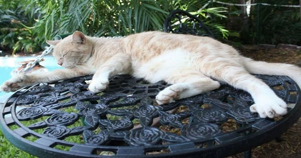 What Will Become Of The Cats at Ernest Hemingway's As Hurricane Irma Hits?