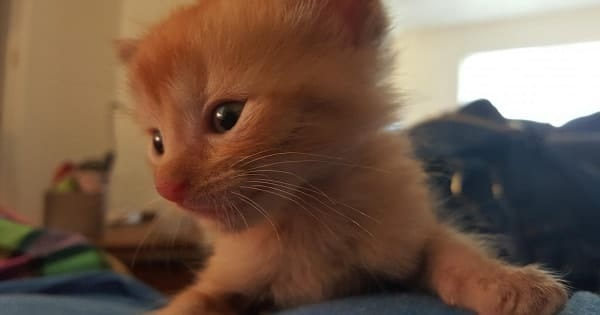 3 Kittens Go From Filthy and Scared to Healthy, Strong Cats – You Simply Won't Believe the Transformation