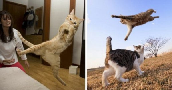 10+ Adorable Ninja Cats In Action!