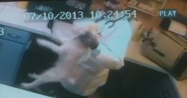 Vet Caught Red-handed Punching and Choking Animals – Gets His Job ….