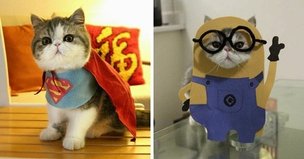 Presenting Snoopy, The Cat In Cosplay Costumes That Will Make Your Day