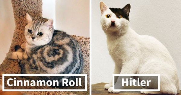 10+ Cats With The Craziest Fur Markings Ever