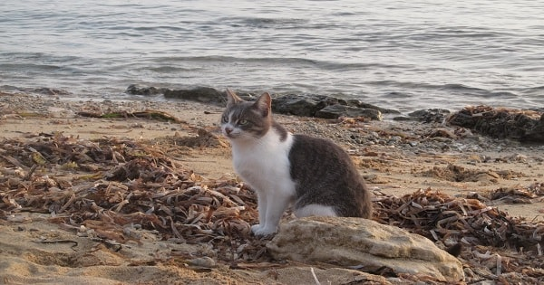Book Today, Kitty Lovers, To Visit the Unique CAT BEACH in Italy!