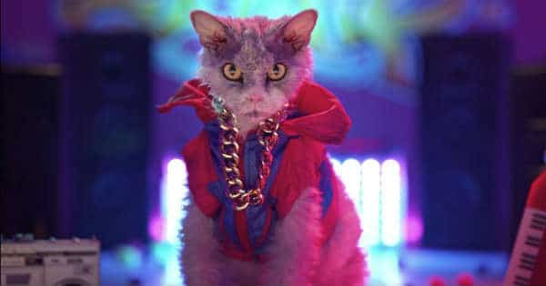Pompous Albert Is the New Face of Grumpiness! Watch the 1st TV Commercial with this Famous Cat!