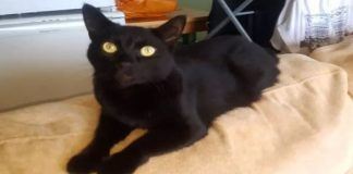 Owners Told The Vet To Put Their Cat Down - The Reason Will Infuriate You!