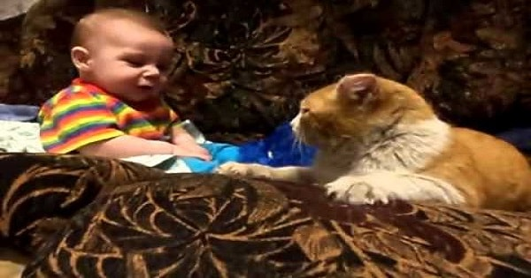 """Cat Tells Baby """"It's Time For You to Sleep!"""""""