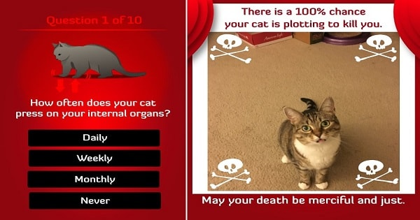 Brand New App Scans Your Cat And Tells You If He's Plotting To Kill You