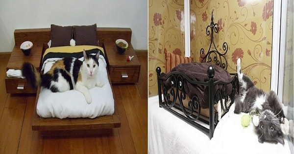 10+ Cat Luxuries You've A Probably Never Thought Of …