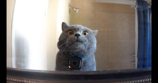 GoPro on a Cat Left Home Alone!