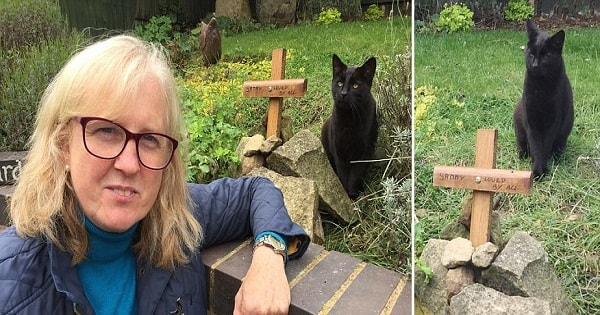 Grieving Pet Owner Is Shocked When The Cat She Thought She'd Buried, Strolls Into Her House