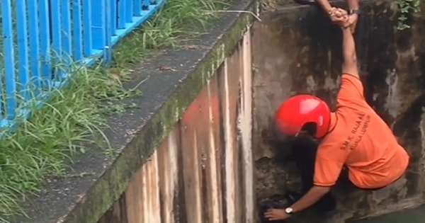 Watch These Kids Go To Extreme Lengths To Rescue Kitten Trapped Down In …