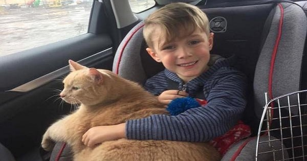 Young Boy Could Have Picked ANY Animal to Adopt, But Instead, Chooses a Lovely Senior Tabby