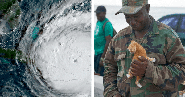 Hurricane Irma Almost Meant The End Of This One Kitten – But That All Changed When …