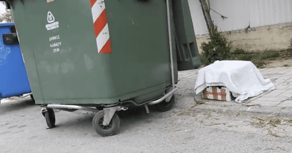 Woman Discovers Abandoned Box Next To Garbage Bin, But When She Looks Inside Her Heart Melted!