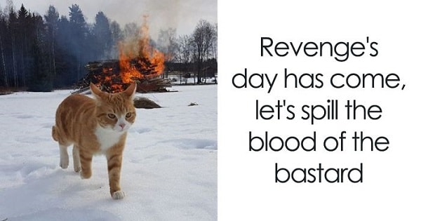 A Twitter Account Pairs Cat Pics With Metal Lyrics And The Results Are Genius!