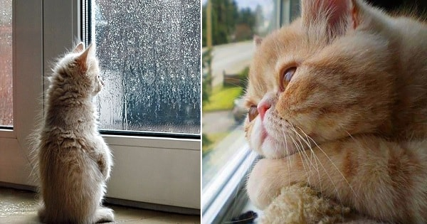 10+ Sad Cats Who Are Just Longing To See Their Humans Again!