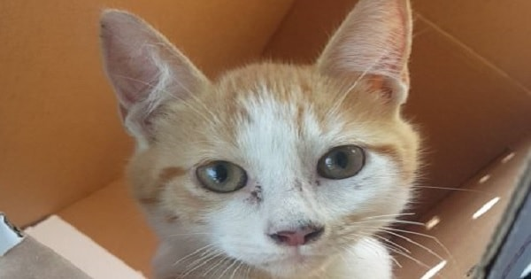 Man Adopts a Kitten Right Before Irma Hit Just So He Could Have A Companion To …