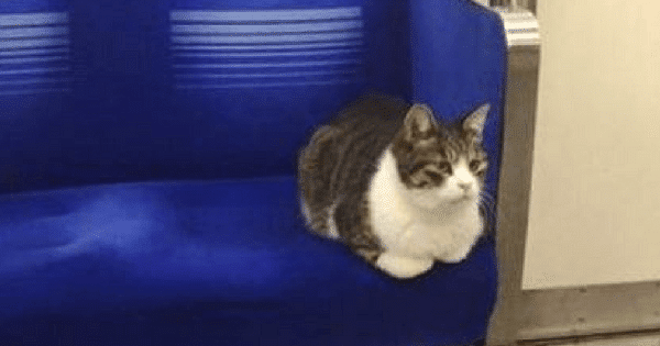 This Kitty Rides The Tokyo Subway All By Himself And Has Done So Since …